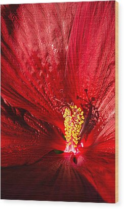 Passionate Ruby Red Silk Wood Print