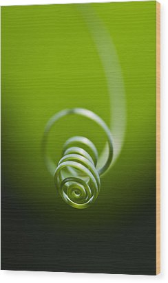 Passionflower Tendril Wood Print