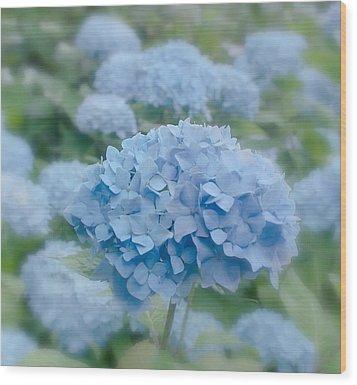Pastel Blue Hydrangea Wood Print by Kim Hojnacki