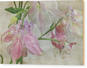 Wood Print featuring the photograph Pastel Columbines by Peggy Collins