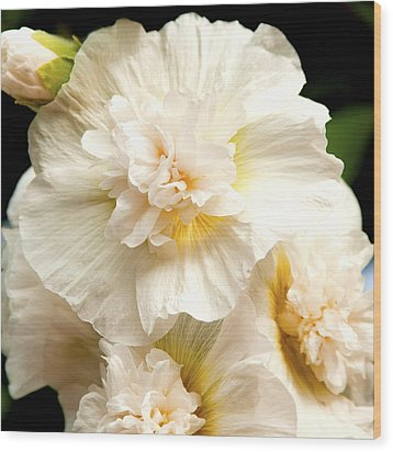 Wood Print featuring the photograph Pastel Delphinium by Jerry Cowart