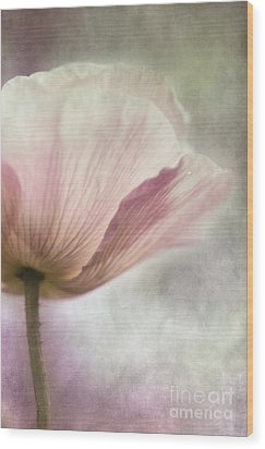 Pastel Pink Poppy Wood Print by Priska Wettstein