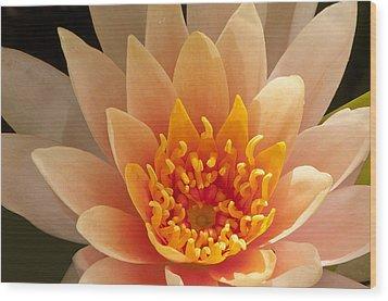 Pastel Waterlily Wood Print by Phyllis Peterson