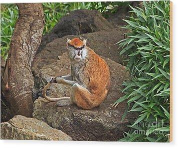 Patas Monkey Wood Print by Kate Brown