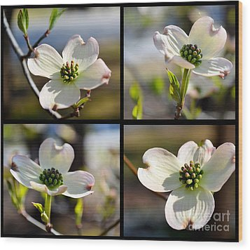 Patched Together Dogwoods Wood Print