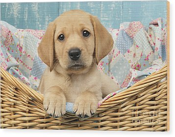 Patchwork Puppy Dp793 Wood Print by Greg Cuddiford