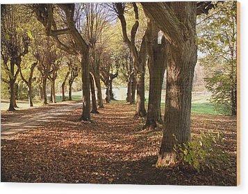 Path 1- Ostromecko Gardens Wood Print