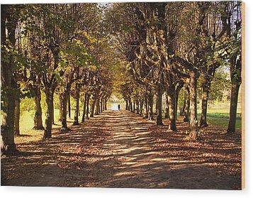 Path 3- Ostromecko Gardens Wood Print