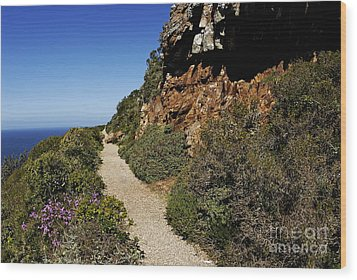 Path At Cape Of Good Hope Wood Print by Sami Sarkis