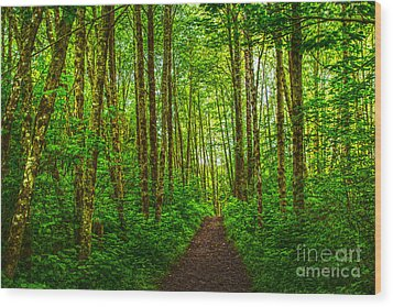 Path In Green Wood Print by Sonya Lang