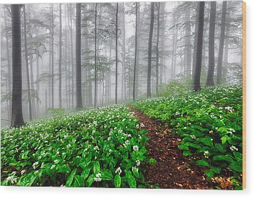 Path In The Mist Wood Print by Evgeni Dinev