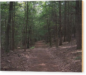 Path In The Woods Wood Print by Catherine Gagne