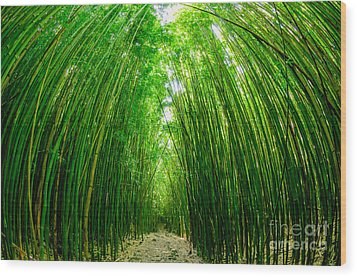 Path Through A Bamboo Forrest On Maui Hawaii Usa Wood Print