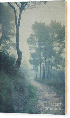 Path Through Pinewood Mist Wood Print by Paul Grand