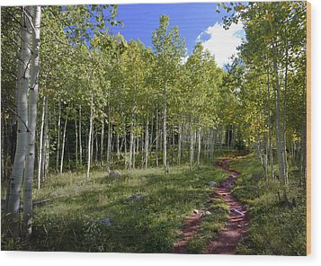 Path Through The Aspens In Colorado Wood Print by Karen Stephenson
