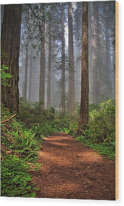 Path Thru The Redwoods Wood Print by Michael  Ayers