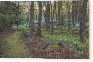 Path To The Daffodils Wood Print by Bill Wakeley
