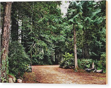 Pathway In The Forest Wood Print by Rafael Escalios