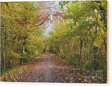 Pathway Through Sunlit Autumn Woodland Trees Wood Print by Natalie Kinnear