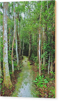 Pathway To The Rainforest Wood Print by Kicking Bear  Productions