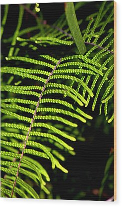 Wood Print featuring the photograph Pauched Coral Fern by Miroslava Jurcik