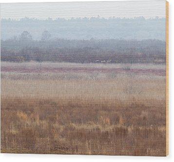 Wood Print featuring the photograph Paynes Prairie White Birds by Paul Rebmann