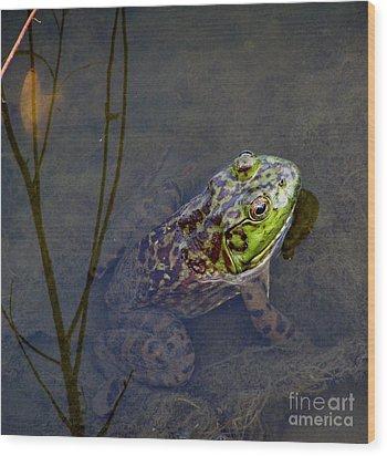 Peace Frog Wood Print