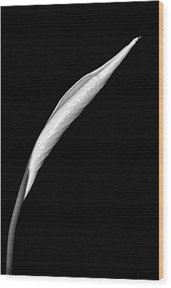 Peace Lily II Wood Print by Jeff Burton