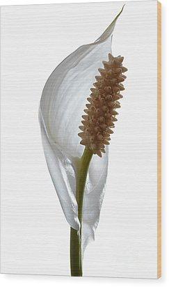 Peace Lily. Wood Print
