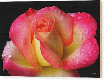 Peace Rose 001 Wood Print by George Bostian
