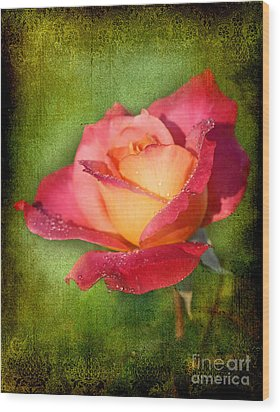 Peace Rose Wood Print by Joan McCool