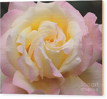 Peace Rose Wood Print by Olivia Hardwicke