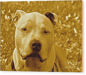 Peace To End Dog Fighting Wood Print by Q's House of Art ArtandFinePhotography