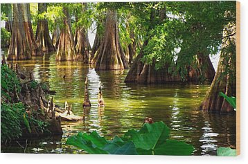 Peaceful Cypress Trees  Wood Print