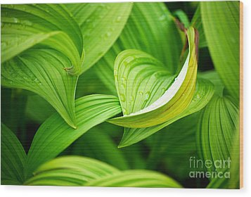 Wood Print featuring the photograph Peaceful Green by Cynthia Lagoudakis