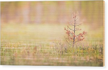 Peaceful Wood Print by Janne Mankinen