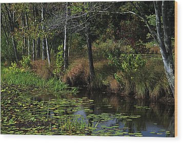 Peaceful Pond Wood Print by Karol Livote
