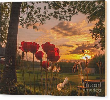 Peaceful Poppy Wood Print
