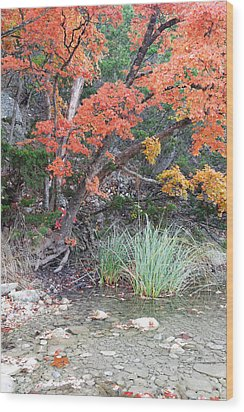 Peaceful Retreat Lost Maples Texas Hill Country Wood Print by Silvio Ligutti