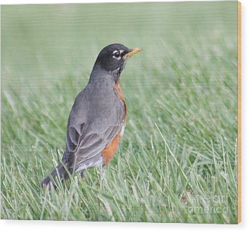 Wood Print featuring the photograph Peaceful Robin by Anita Oakley