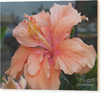 Wood Print featuring the photograph Peach And Cream by Lingfai Leung
