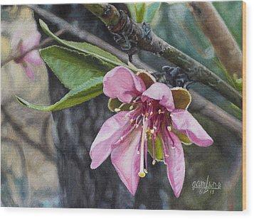 Peach Blossom Wood Print by Joshua Martin