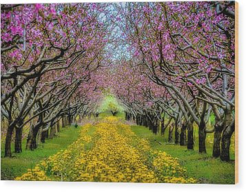 Peach Blossoms Dandelion Carpet Wood Print by Henry Kowalski