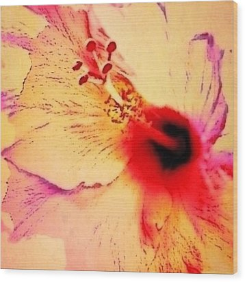 Peach Colored Hibiscus Flower Close Up - Square Wood Print