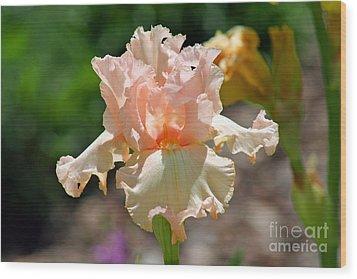Peach-colored Iris Wood Print by Karen Adams