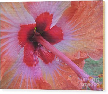 Peach Hibiscus Wood Print