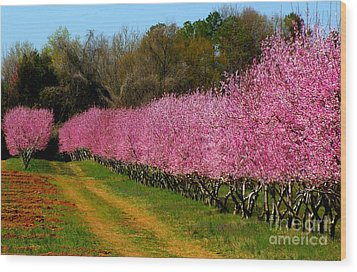 Peach Orchard In Carolina Wood Print by Lydia Holly