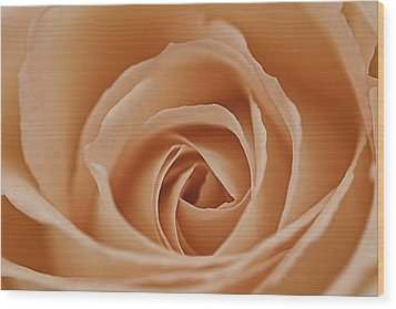 Peach Rose Wood Print by Lesley Rigg