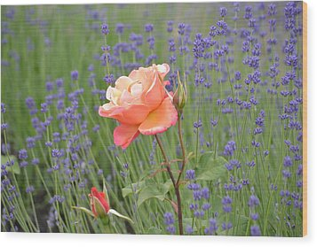 Peach Roses In A Lavender Field Of Flowers Wood Print by P S