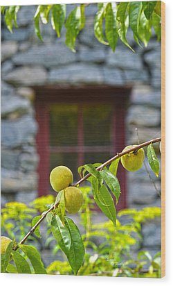 Peach Tree At The Old Mill Of Guilford Wood Print by Sandi OReilly